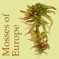 Mosses of Europe